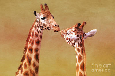 Photograph - Je T'aime Giraffes by Terri Waters