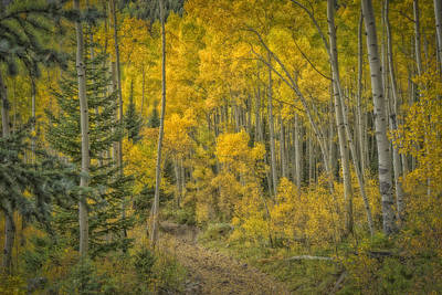 Photograph - Jeep Road Into The Aspen Marble Colorado Dsc06899 by Greg Kluempers