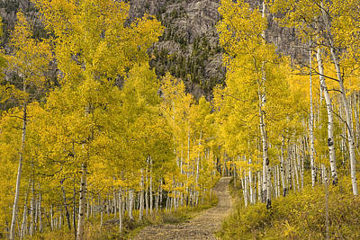 Photograph - Jeep Road Thru The Aspen Marble Colorado Dsc06875 by Greg Kluempers