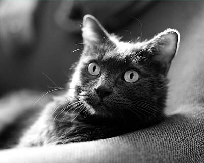 Digital Art - Jeff The Cat In Black And White by Susan Stone