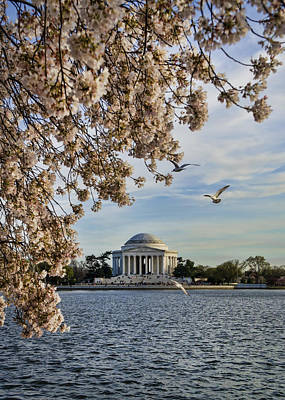 Photograph - Jefferson by Heather Applegate