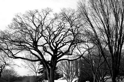 Jefferson Memorial - Distant View Art Print by Fareeha Khawaja