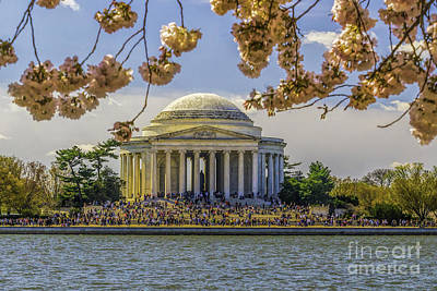 Photograph - Jefferson Memorial  And Cherry Blossoms by Nick Zelinsky