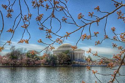 Jefferson Memorial - Cherry Blossoms Art Print by Marianna Mills