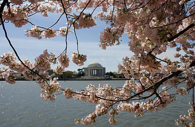 Cherry Blossom Festival Photograph - Jefferson Memorial Framed By Cherry Blossoms by Brendan Reals