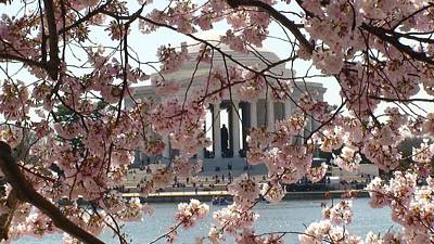 Photograph - Jefferson Through The Cherry Blossoms by Charles Kraus
