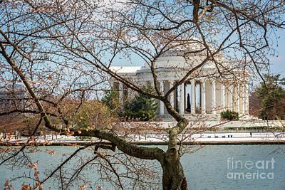 Photograph - Jefferson Through The Cherry Buds II by Karen Jorstad