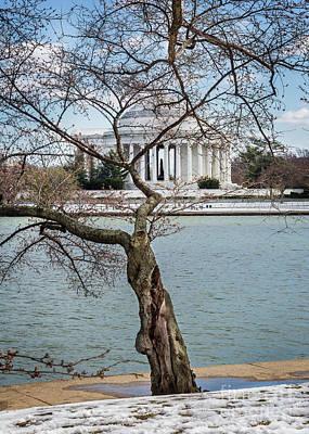 Photograph - Jefferson Through The Cherry Buds by Karen Jorstad