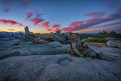 Photograph - Jeffrey Pine Dawn by Rick Berk
