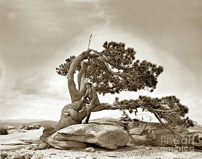Photograph - Jeffrey Pine Sentinel Dome Yosemite Circa 1900 by California Views Mr Pat Hathaway Archives