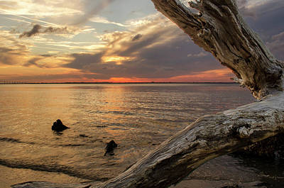 Yellow Photograph - Jekyll Driftwood At Sunset by Greg Mimbs