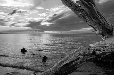 Jekyll Island Photograph - Jekyll Driftwood At Sunset In Black And White by Greg Mimbs