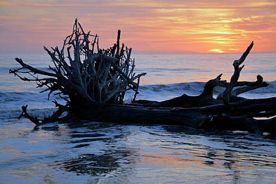 Photograph - Jekyll Island Driftwood Beach 2018 April by Bruce Gourley