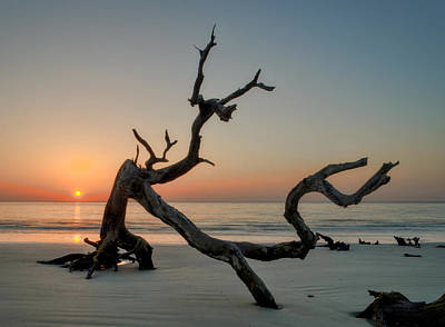 Sand Photograph - Jekyll Island Driftwood by Greg Mimbs