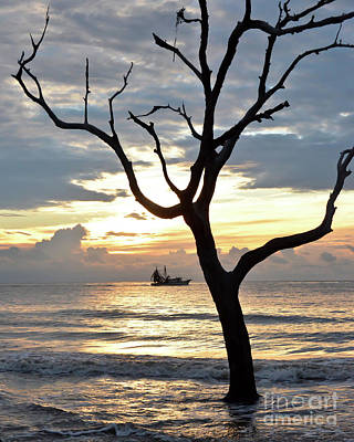 Photograph - Jekyll Island - Early Morning At Driftwood Beach by Kerri Farley