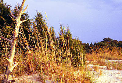 Pop Art Rights Managed Images - Jekyll Island Evening Royalty-Free Image by Thomas R Fletcher