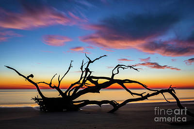 Photograph - Jekyll Island Sunrise On Driftwood Beach by Sanjeev Singhal