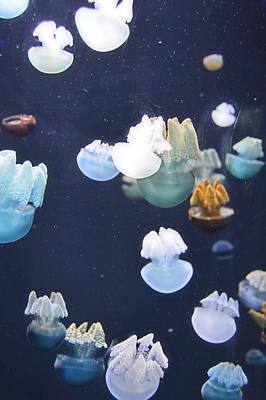 Photograph - Jellies 18 by Judith Morris