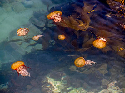 Photograph - Jellies At The Jetty by Derek Dean