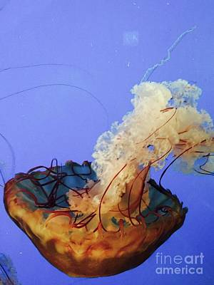 Photograph - Jelly Ballet by Beth Saffer