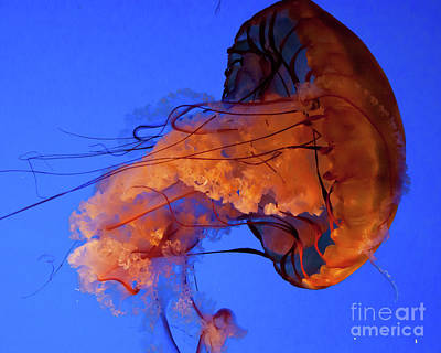 Photograph - Jelly Fish 1 by Susan Cliett