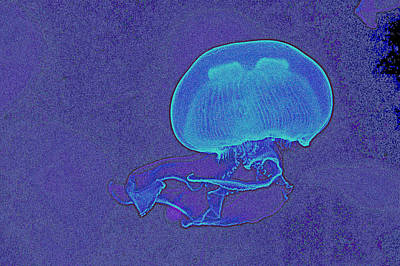 Jelly Fish Painting - Jelly Fish by Celestial Images