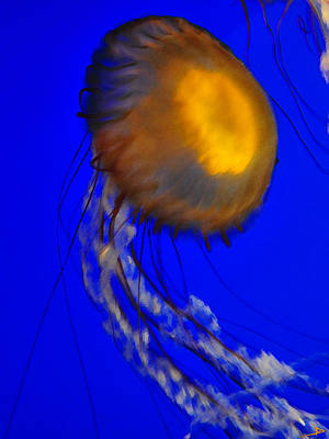 Painting - Jelly Fish In Blue Water by David Lee Thompson