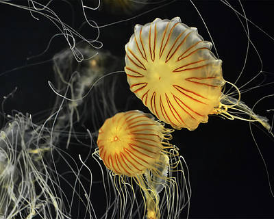 Digital Art - Jelly Fish In Flight, Looks A Bit Star Trek Ish  by Anthony Murphy