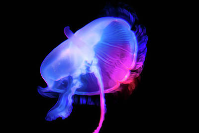 Photograph - Jelly Fish Under Neon Lights by Miroslava Jurcik