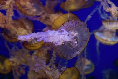 Jellyfish 4 Art Print