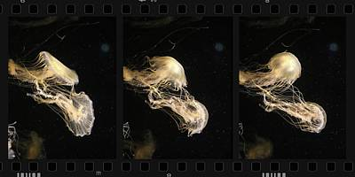 Photograph - Jellyfish Dance by John Meader