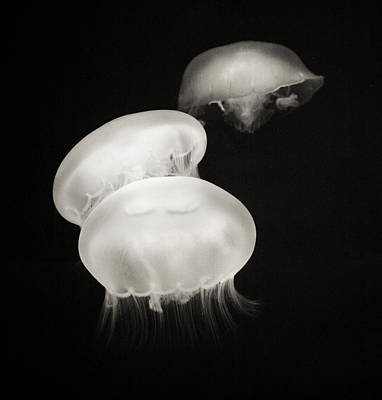 Photograph - Jellyfish Friends by Marilyn Hunt