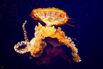 Jellyfish Original