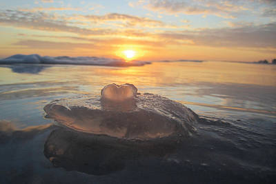 Photograph - Jellyfish Love by Jim Clark