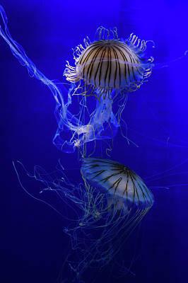 Jellyfish Print by Pati Photography