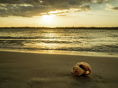 Photograph - Jellyfish Watching The Sunset by Tammy Ray