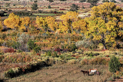 Photograph - Jemez Valley Horses by Kathleen Bishop
