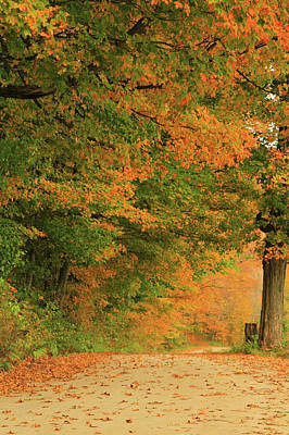Photograph - Jenne Farm Road In Autum  by Dan Sproul
