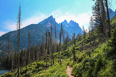 Photograph - Jenny Lake Trail by David Lyle