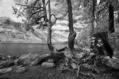 Photograph - Jenny Lake Wyoming by Ken Barrett