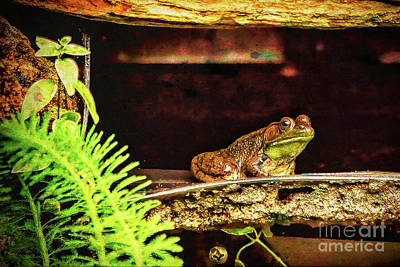Photograph - Jeremiah Was A Bullfrog by Kay Brewer