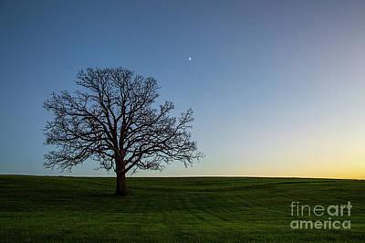 Photograph - Jeremy's Oak by Mark Avery