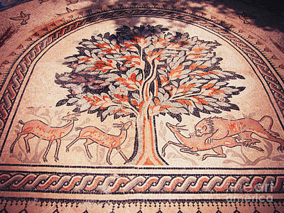Photograph - Jericho Tree Of Life Orange by Donna L Munro