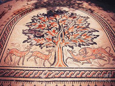 Photograph - Jericho Tree Of Life Orange by Donna Munro
