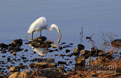 Photograph - Jersey Meadowlands Egret by Mary Haber