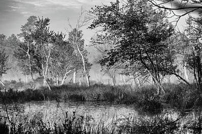 New Jersey Pine Barrens Photograph - Jersey Pine Lands In Black - White by Louis Dallara