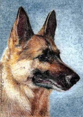 Drawing - Jersey The German Shepherd by Melissa J Szymanski