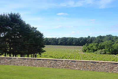 Winery Photograph - New Jersey Harvest by Brian Manfra