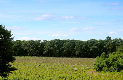 Winery Photograph - Jersey Vineyard by Brian Manfra