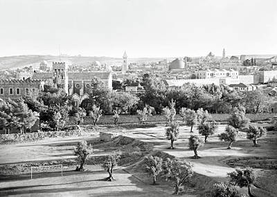 Photograph - Jerusalem Olive Trees by Munir Alawi